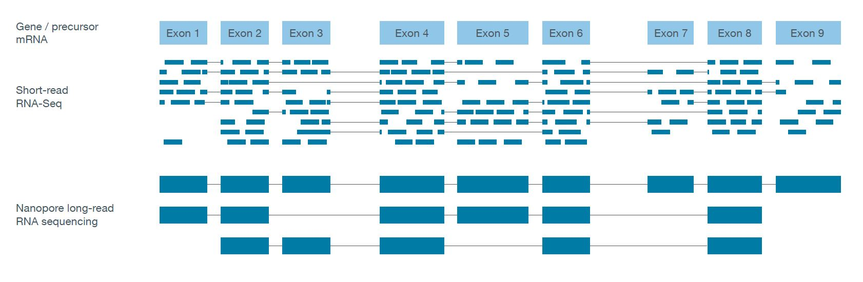 Schematic comparing full-length nanopore reads with short read RNA-seq